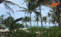 AWAK-Guadeloupe-excursion-Petite-Terre-iguane-06