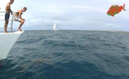 AWAK-Guadeloupe-excursion-Petite-Terre-le-retour-avec-les-dauphins
