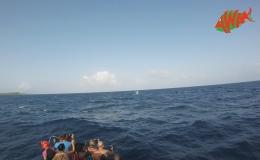 AWAK-Guadeloupe-excursion-petite-terre-baleine01