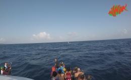 AWAK-Guadeloupe-excursion-petite-terre-baleine02