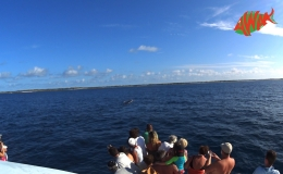 AWAK-Guadeloupe-excursion-petite-terre-baleine03