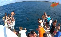 AWAK-Guadeloupe-excursion-petite-terre-dauphins01
