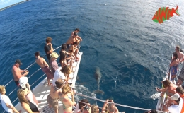 AWAK-Guadeloupe-excursion-petite-terre-dauphins02