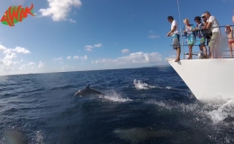 AWAK-Guadeloupe-excursion-petite-terre-dauphins03