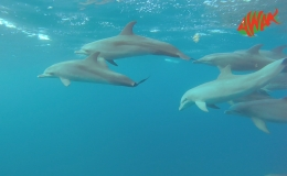 AWAK-Guadeloupe-excursion-Petite-Terre-les-dauphins-02