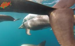 AWAK-Guadeloupe-excursion-Petite-Terre-les-dauphins-07