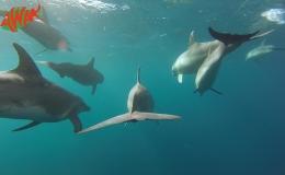 AWAK-Guadeloupe-excursion-Petite-Terre-les-dauphins-08