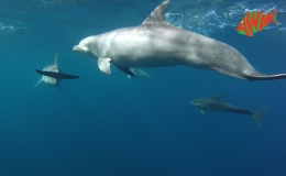 AWAK-Guadeloupe-excursion-petite-terre-dauphins