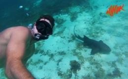 AWAK-Guadeloupe-excursion-petite-terre-requin-nourrice01