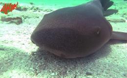 AWAK-Guadeloupe-excursion-petite-terre-requin-nourrice02