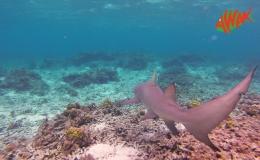 AWAK-Guadeloupe-excursion-petite-terre-requin01