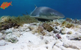 AWAK-Guadeloupe-excursion-petite-terre-requin02