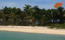 AWAK-Guadeloupe-excursion-petite-terre-cocoteraie