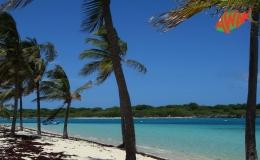 AWAK-Guadeloupe-excursion-petite-terre-cocoteraie-plage01