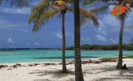 AWAK-Guadeloupe-excursion-petite-terre-cocoteraie-plage02