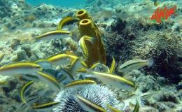 AWAK-Guadeloupe-excursion-petite-terre-girelles
